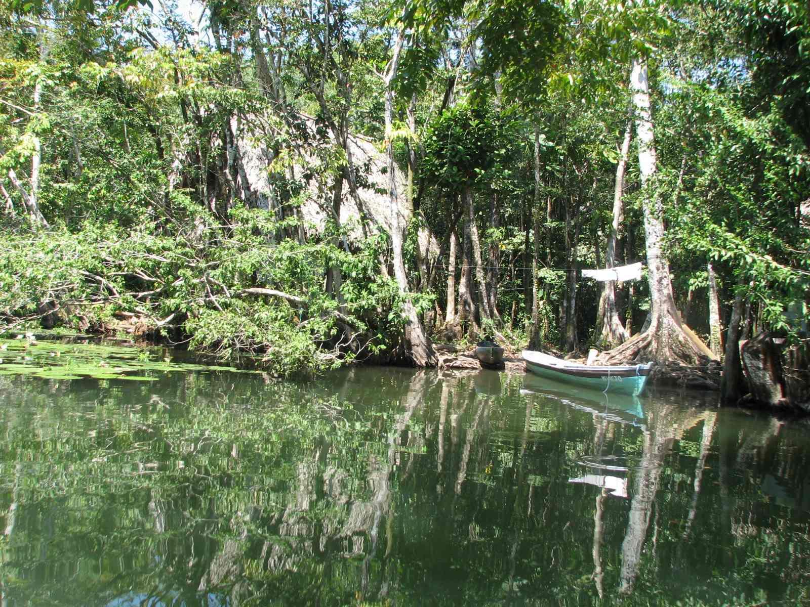 Jungle On Rio